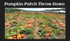 Pumkin patch pic